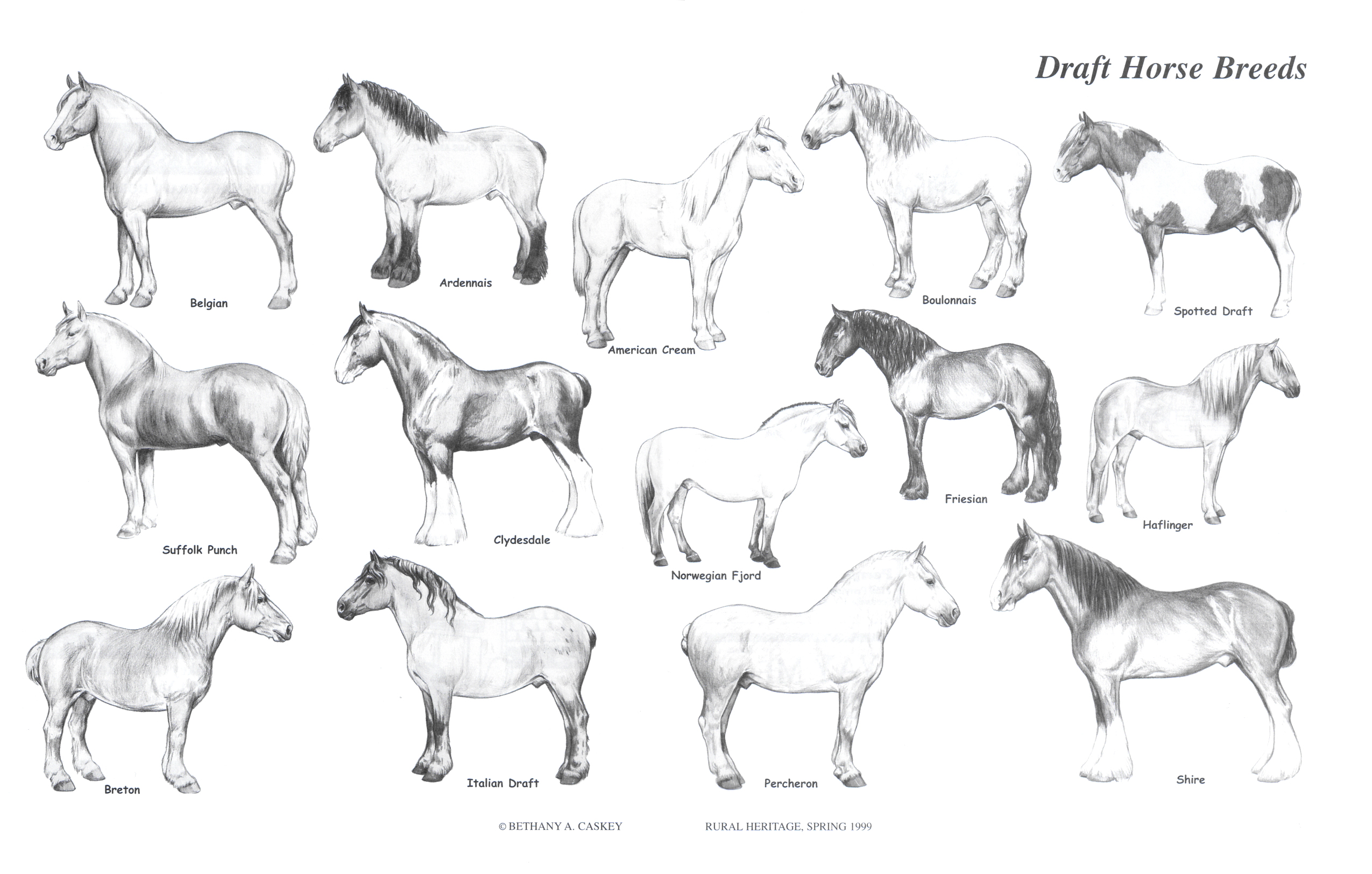 Rural Heritage Draft Horse Breeds Illustration
