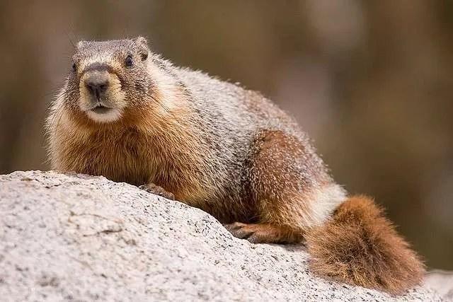 Staunton State Park Celebrates Marmot Fest July 18/19