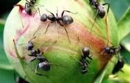 Termites or Ants