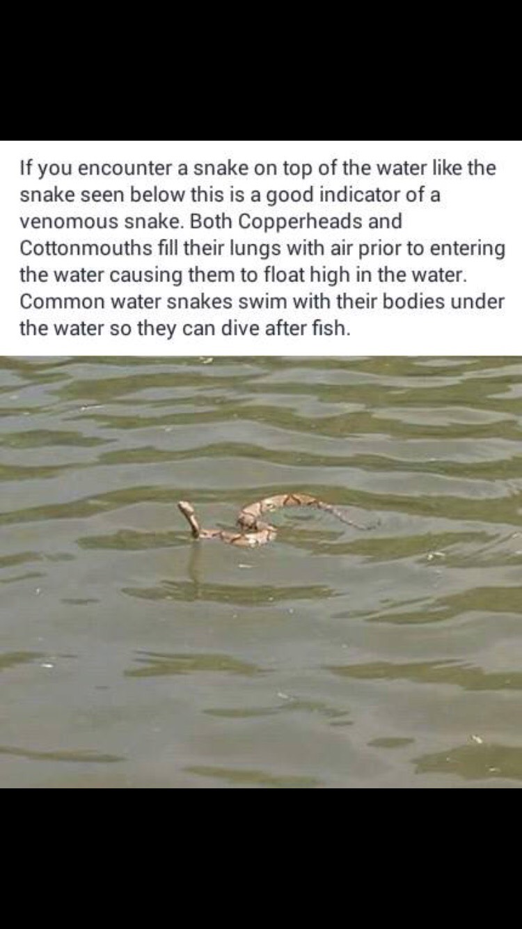 Water Snakes, Poisonous or Not?