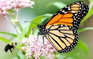 Celebrate National Wildflower WeekHelping Native Plants and Wildlife