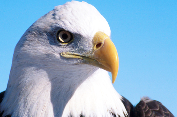Celebrate Endangered Species Day 2018