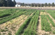 Diving into Cereal Rye