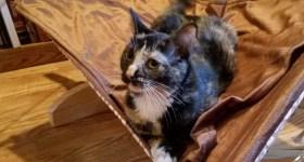 Farm Kittens and Cat Hammocks
