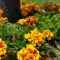 How To Choose The Best Plants For Your Flowerbed