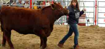 Ranchers and farmers of tomorrow show off their livestock