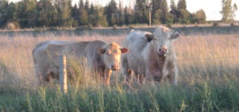 New insurance tool available for western cattle and hog producers