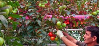 FCC: Greenhouse producers seek light during darkest days