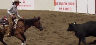 Calgary Stampede Working Cow Horse – Open Bridle Class Day 1 Highlights – Interviews