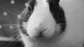 How much do you know about raising rabbits for consumption?