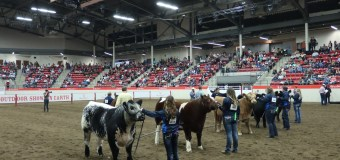 Competitors from across North America to take part in Stampede Steer Classic