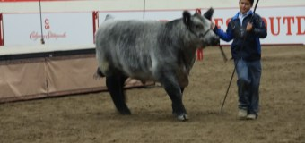 Junior Steer Classic Grand and Reserve Champions credit hard work for success