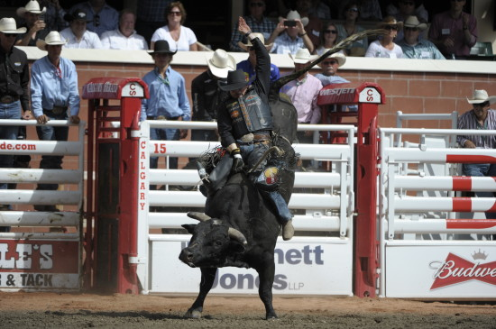 Bucking Bulls And The Stampede Fact Vs Fiction Rural