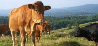 North American livestock production to rise: Analyst