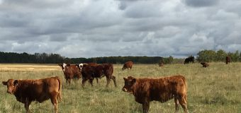 BCRC: The BCRC is asking for more money from cattle producers. Here's why.