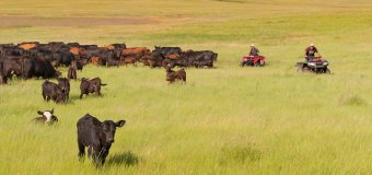 BCRC: A few key practices can reduce internal parasite resistance