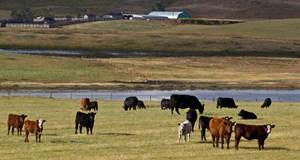 BCRC: Veterinary insights from across Canada: Webinar January 15