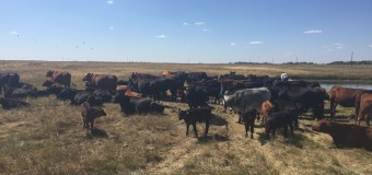 AFAC: A first-hand look into a farm-to-plate operation