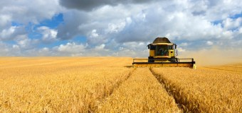 New barley survey powers strategies to harvest more feed value