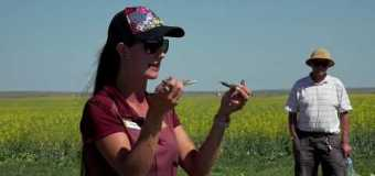 Farming Smarter: Blackleg in Canola – Medicine Hat Field Day