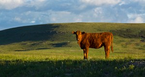 BCRC: Beef's Place in a Healthy Environment: Infographic