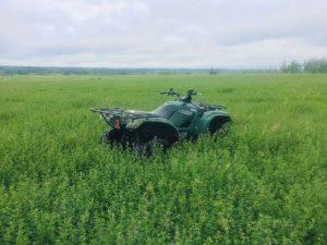 aerial seeding alfalfa
