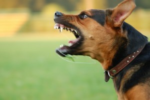 Orange County Dog Bite Injury Lawyers - Dog Barking