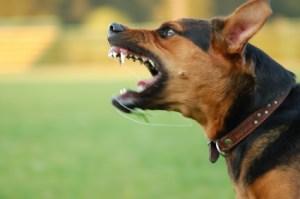 Orange County Dog Bite Lawyers - fierce dog