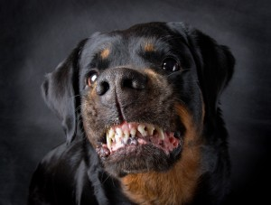 Orange County dog bite attorney - growling dog