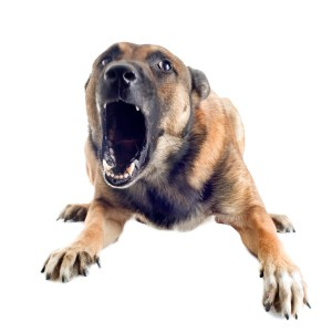 Irvine Dog Attack Lawyer - mean dog