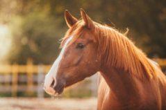 horse feeds & supplies