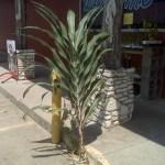 Pet Corn Stalk