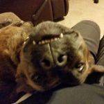 RussellFeed_Pet Photo_Jadzia