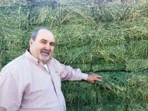 Arizona Alfalfa Hay