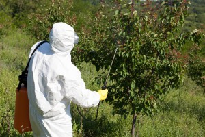 Spraying Pecan and Fruit Trees