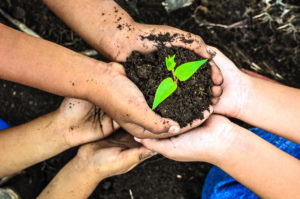 hands holding soil and plant - organic gardening