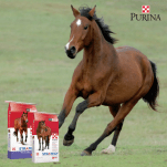 Horse Feeds With Gastric Support