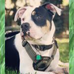 Russel Pet photos (7)