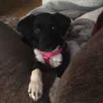 Russel Pet_cap photos (20)