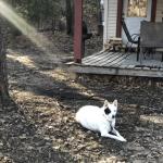 Russel Pet_cap photos (22)