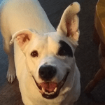 Russel Pet_cap photos (23)