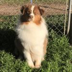 Russel Pet_cap photos (25)