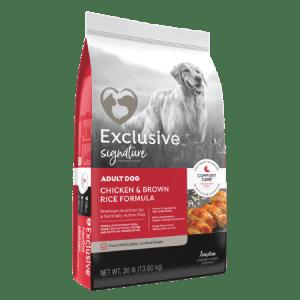 Exclusive Adult Active Dog