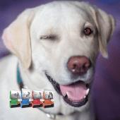 Exclusive Dog Food with Comfort Care at Pasturas Los Alazanes in Dallas, Texas.