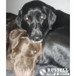 Russell Feed renren mocha