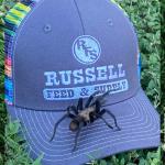 Stylish eight-legged friend enjoying Russell Feed & Supply's caps!