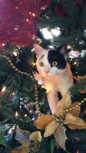 Cat Disappearing in Christmas Tree