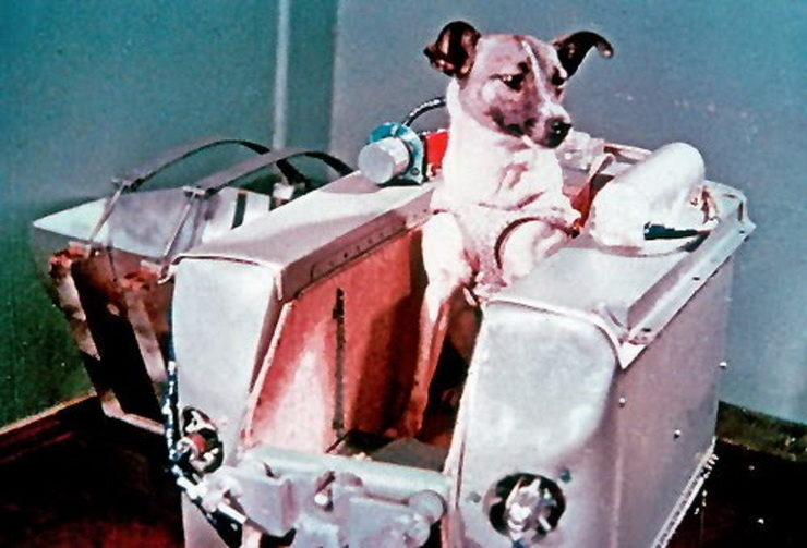 First Dog in Space