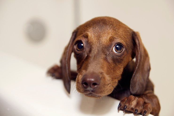 doxie photo