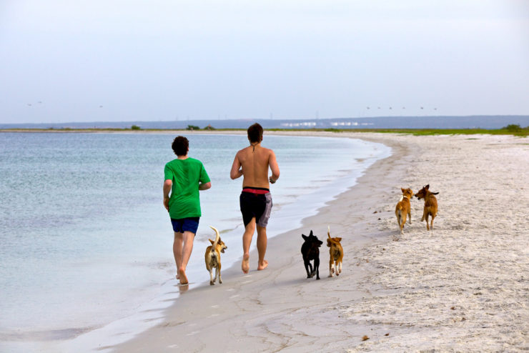 jogging with dogs
